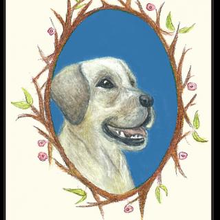 סיפורי חיות קלפים טיפוליים עם בעלי חיים