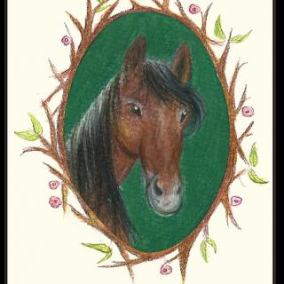 קלף טיפולי – סוס