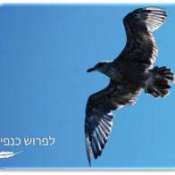 החופש לעוף - ערכת קלפים למאמנים