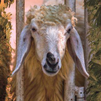 קלפי טיפול באמצעות בעלי חיים