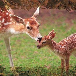 חיית השדה - קלפים טיפוליים באמצעות בעלי חיים
