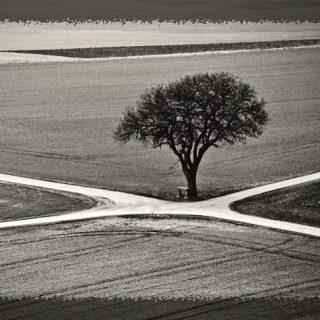 כי האדם עץ השדה קלפי טיפול מהטבע