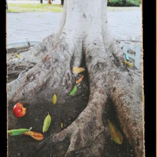 קלפי עצים קלפים למנחי קבוצות
