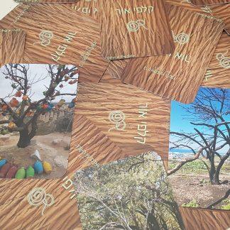 קלפי אור עצים קלפים למנחי קבוצות