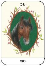 קלף טיפולי - סוס
