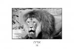 קלף אריה נפש חיה
